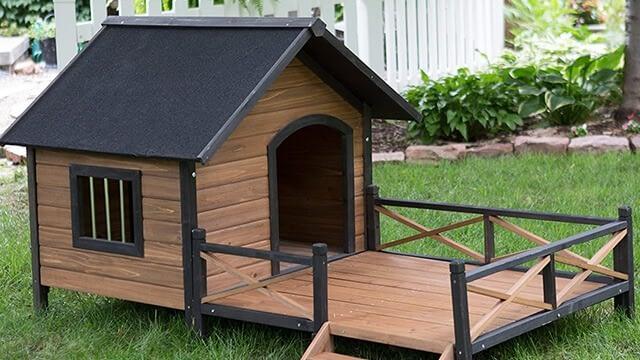 Best outdoor dog house