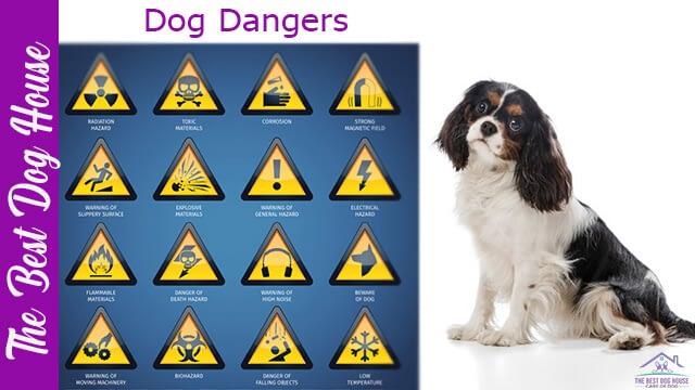 dog dangers