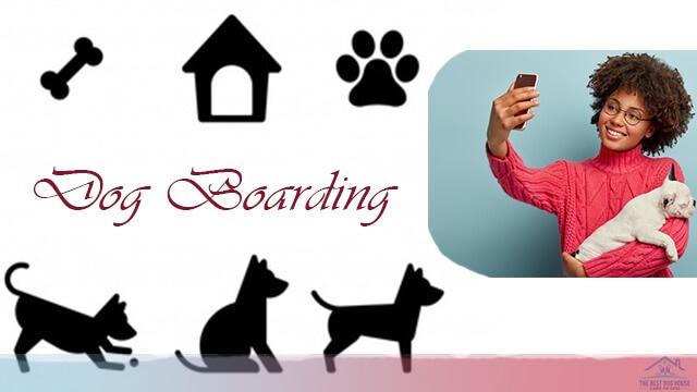 Cheap dog boarding