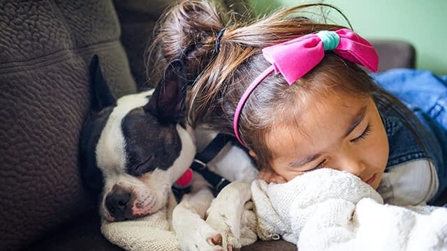 Why your dog shouldn't sleep with you