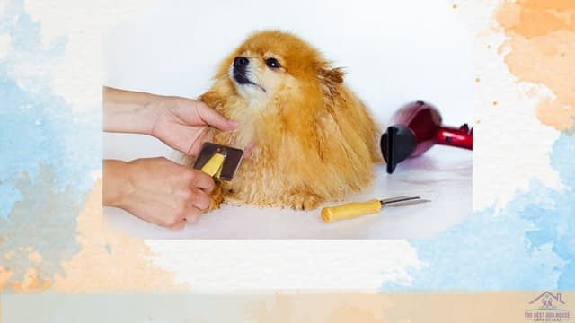 Groom a dog at home