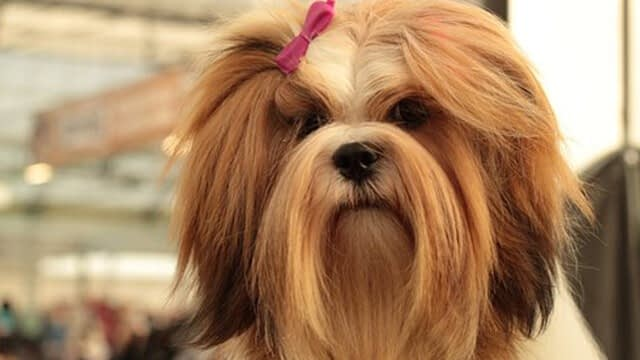How Often Should You Groom Your Dog