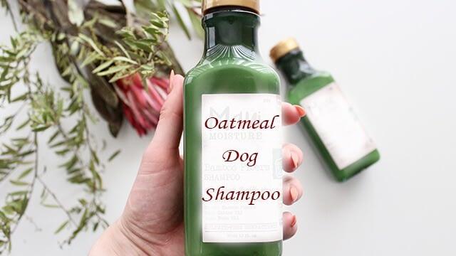 Homemade dog shampoo with oatmeal