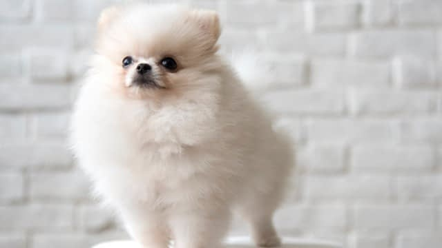 best small dog breeds for families