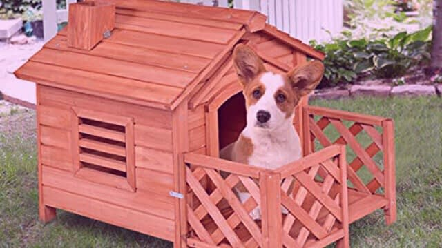 designed dog house