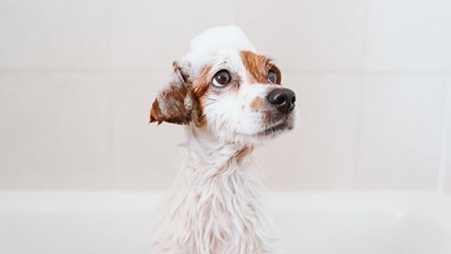 homemade dog shampoo with coconut oil