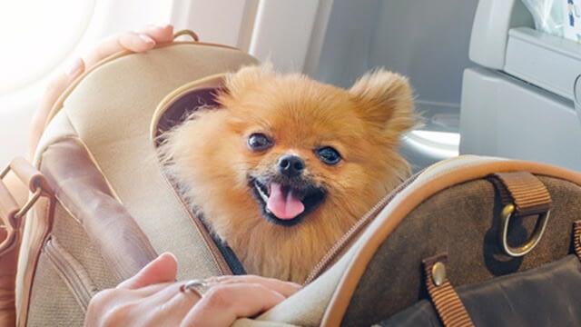 cheap dog boarding near me