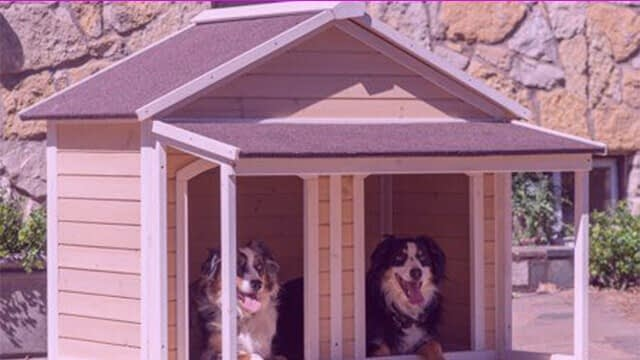 double entrance dog house