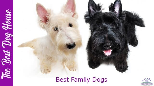 best family dogs
