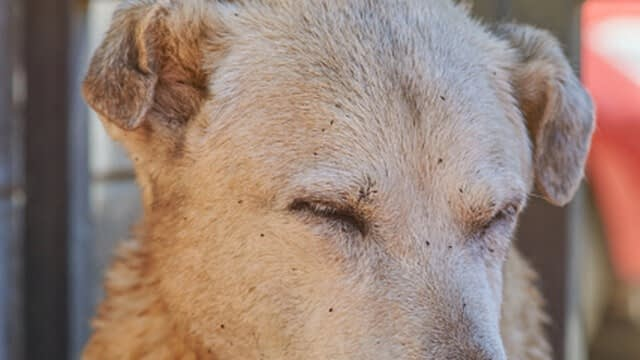 remove debris by trimming your dog's face