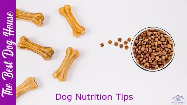dog nutrition tips