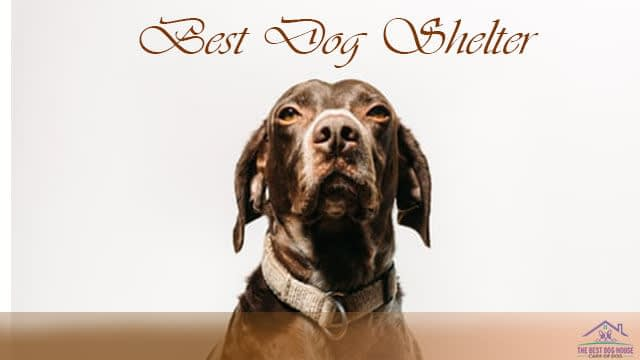 Dog shelter Los Angeles