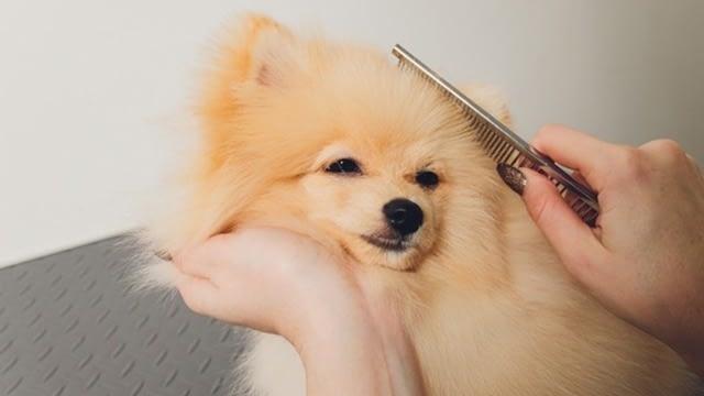 top grooming