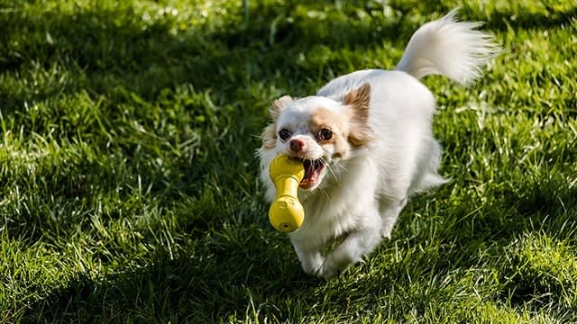 Can Dogs Be Left Outside Without Toys or Other Dogs?