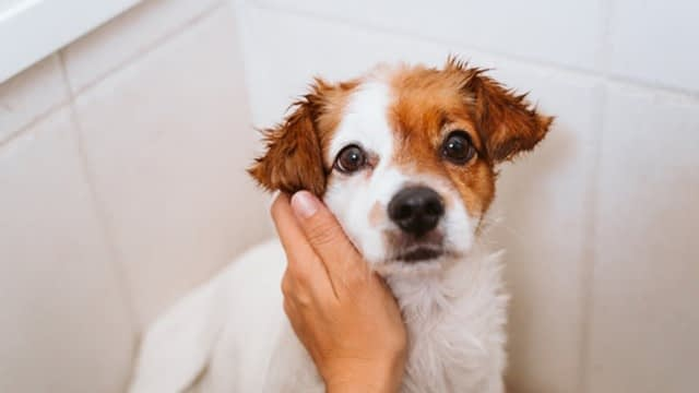 Grooming schedule for short-haired dogs