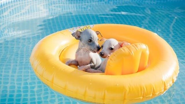 Use dog floaties