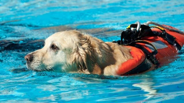Do you like to be your pup's lifeguard?