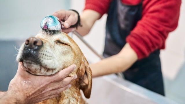 Can I Use Human Shampoo On My Dog