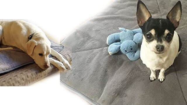 heating pad for dog house