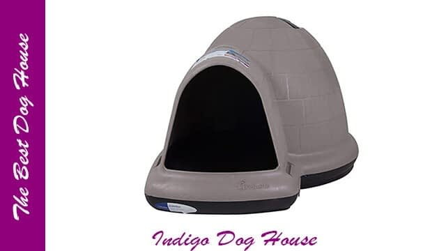 Indigo dog house