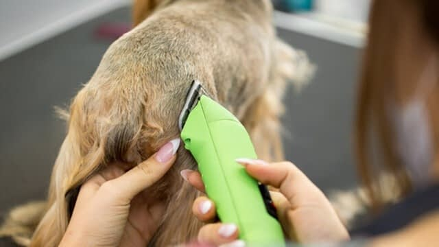 how to cut a dog's hair with clippers