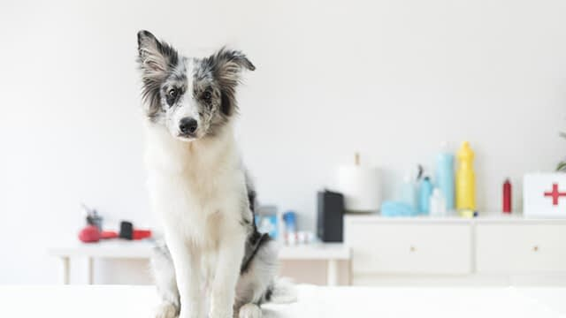 At the time of housetraining your dog