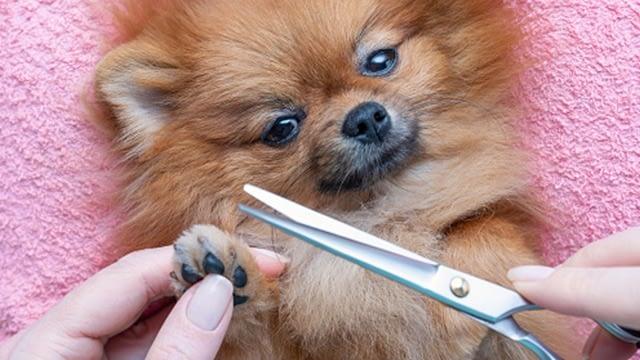 At-home dog grooming tips