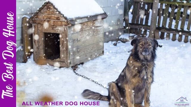 All weather dog house