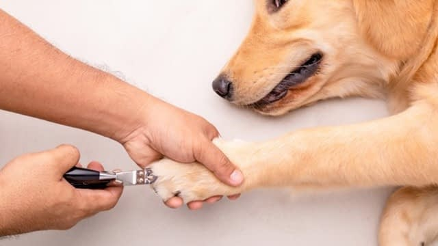 Is it important to trim a dog's nails?