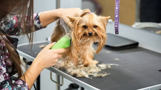 how to trim a dog's face